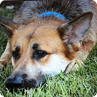 Adopt A Pet :: MERLOT VON MARBACH - Los Angeles, CA