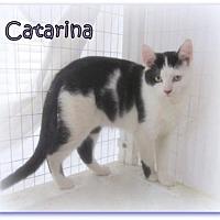 Adopt A Pet :: Catarina - Culpeper, VA