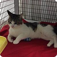 Adopt A Pet :: Finnegan - Janesville, WI