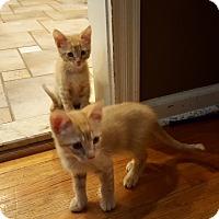 Adopt A Pet :: Michael, John & Wendy - Berkeley Hts, NJ