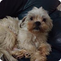 Adopt A Pet :: Raleigh - San Francisco, CA