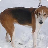 Adopt A Pet :: Chelsea, D6 - Mineral, VA