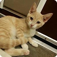 Adopt A Pet :: Cider - Shinnston, WV