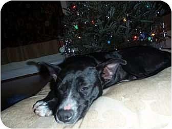 Terrier (Unknown Type, Medium) Mix Dog for adoption in Jacksonville, Florida - Little Bit
