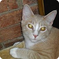 Adopt A Pet :: Karmel - Harrisburg, NC