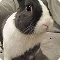 Adopt A Pet :: McFurry - Conshohocken, PA