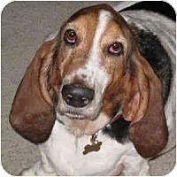 Adopt A Pet :: Manny - Phoenix, AZ