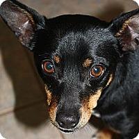 Adopt A Pet :: Mr. T - Stilwell, OK