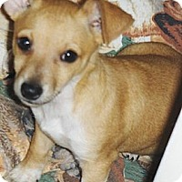 Adopt A Pet :: Sahuaro - Phoenix, AZ