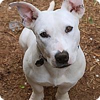 Adopt A Pet :: Otto - Homewood, AL