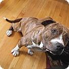 Adopt A Pet :: Dharma