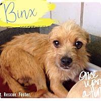 Adopt A Pet :: Binx - San Antonio, TX