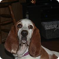 Adopt A Pet :: Athena - Northport, AL