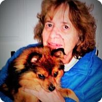 Adopt A Pet :: Milo - Plain City, OH