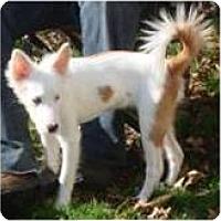 Adopt A Pet :: Liberty - Cleveland, OH