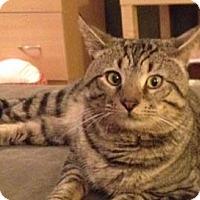 Adopt A Pet :: Caboose - Merrifield, VA