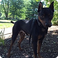 Adopt A Pet :: DJ (Courtesy Post) - Malaga, NJ