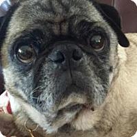 Adopt A Pet :: Toby - Pismo Beach, CA
