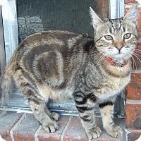 Adopt A Pet :: Brody - Springdale, AR