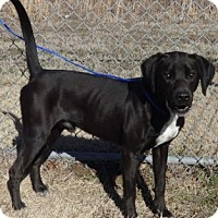 Adopt A Pet :: Nitro - Olive Branch, MS