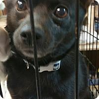Adopt A Pet :: Maya - Ogden, UT