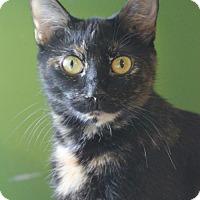 Adopt A Pet :: Tori - Marietta, GA