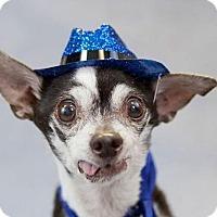 Adopt A Pet :: Herbie - Fort Lauderdale, FL