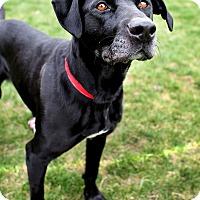 Adopt A Pet :: Oreo - Appleton, WI