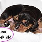 Adopt A Pet :: Penelope's Juno