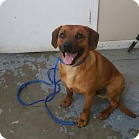 Adopt A Pet :: 4477 - Calhoun, GA