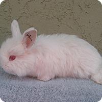 Adopt A Pet :: Snow Drop - Bonita, CA