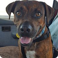 Adopt A Pet :: Clark - Phoenix, AZ