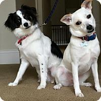 Adopt A Pet :: Sugar & Spice - Dallas, TX