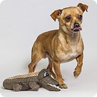 Adopt A Pet :: Humpfrey - Yelm, WA