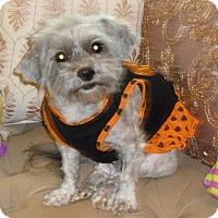 Adopt A Pet :: Hazel - Overland Park, KS