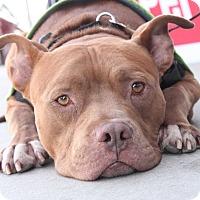 Adopt A Pet :: Otto - Los Angeles, CA