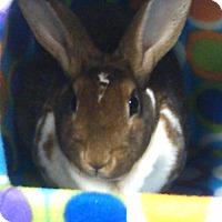 Adopt A Pet :: Faun - North Lima, OH