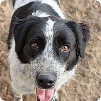 Adopt A Pet :: Jack - Coldwater, MI