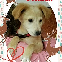 Adopt A Pet :: Donner - Seaford, DE