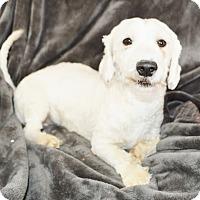Adopt A Pet :: Wesley - Peyton, CO
