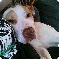 Adopt A Pet :: Casanova - Manhasset, NY
