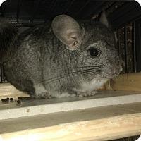 Adopt A Pet :: John - Avondale, LA