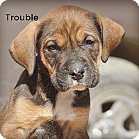 Adopt A Pet :: Trouble~adopted! - Glastonbury, CT
