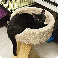 Adopt A Pet :: Alex - Ocean City, NJ