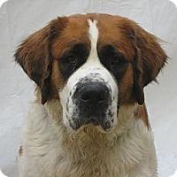 Adopt A Pet :: WALDO -- ADOPTION PENDING - Sudbury, MA