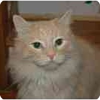 Adopt A Pet :: Cayenne - Columbus, OH