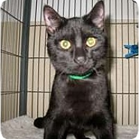 Adopt A Pet :: Hunter - Shelton, WA