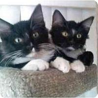 Adopt A Pet :: Noogie & Calvin - Irvine, CA