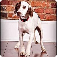 Adopt A Pet :: Susie - Owensboro, KY