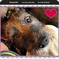 Adopt A Pet :: Buddy (couritesy post) - Scottsdale, AZ